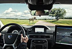 Volvo: Notbremsassistent mit Tiererkennung